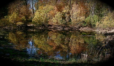 pond in fall_opt