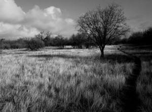Desert solstice_opt