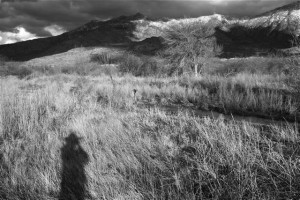 self portrait with grasses